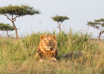Guided Africa Safari Tours