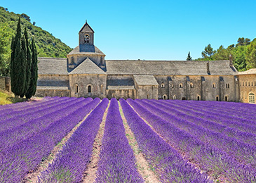 France Guided Tours